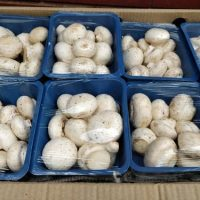 Fresh Mushrooms – 1/2 lb