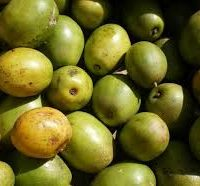 Golden Apple per pound